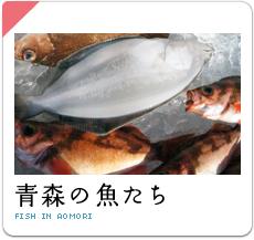 青森の魚たち